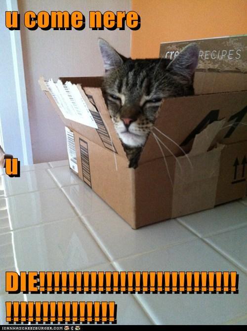 Cheezburger Image 6259653376