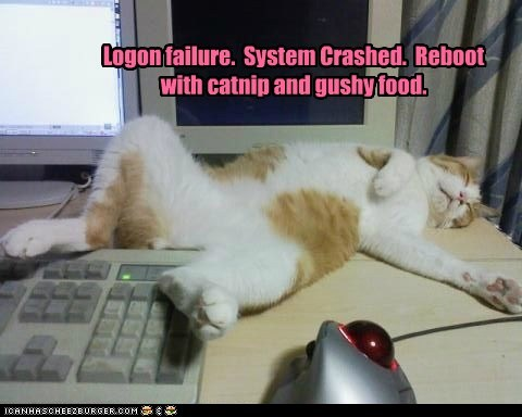 catnip,computer,crashed,failure,gushy food,log on,reboot
