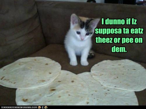 confused eat food nom pee tortilla - 6259792128