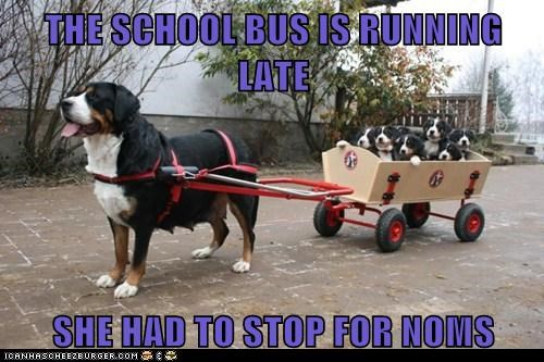 dogs,noms,puppies,school bus,what breed