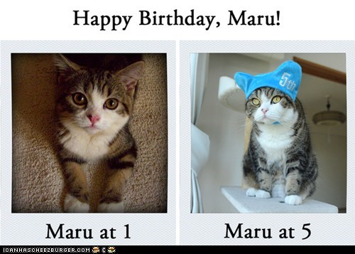 Happy Birthday Maru cat