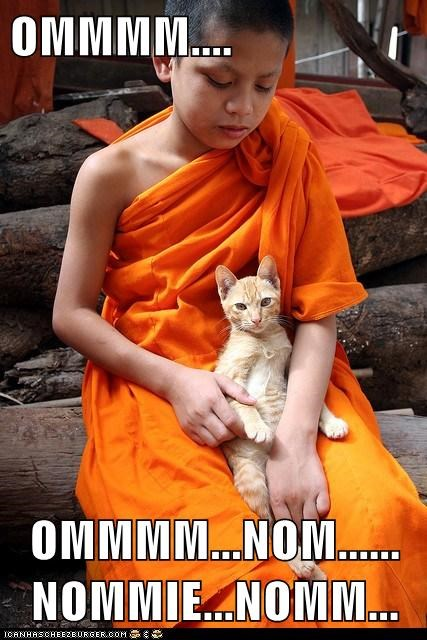 best of the week Cats Hall of Fame lolcats meditate nom noms omnomnom peace zen - 6260173824