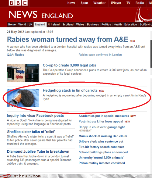 bbc BBC News carrots hedgehog hedgehog stuck in tin of hedgehog stuck in tin of carrots tin tin of carrots