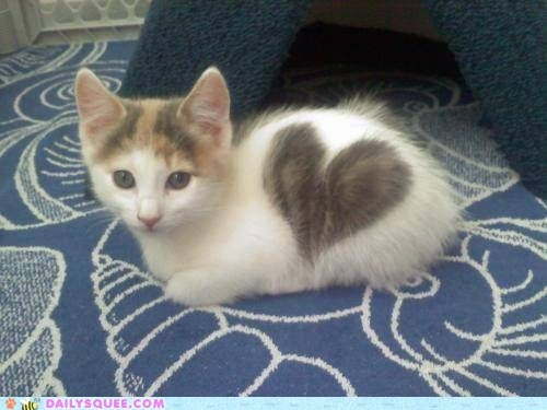 cat,fur,Hall of Fame,heart,kitten,spot