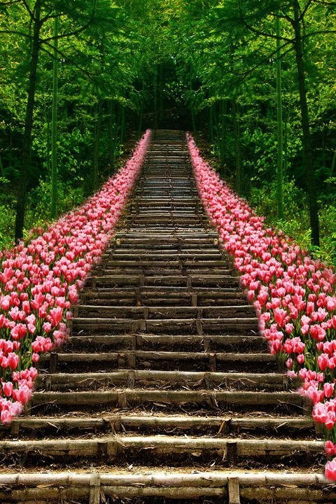 flowers,Hall of Fame,Japan,Kyoto,stairs,tulips