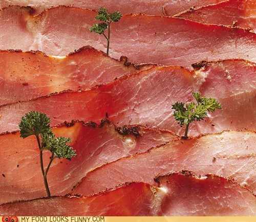 art,ham,hills,meat,trees