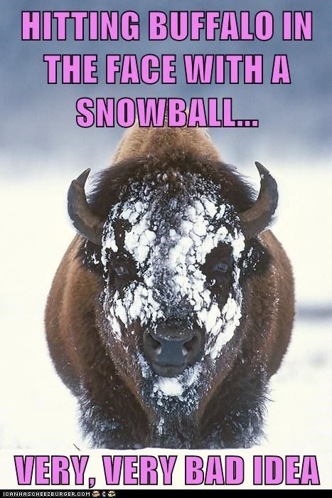 bad idea,buffalo,face,snowball
