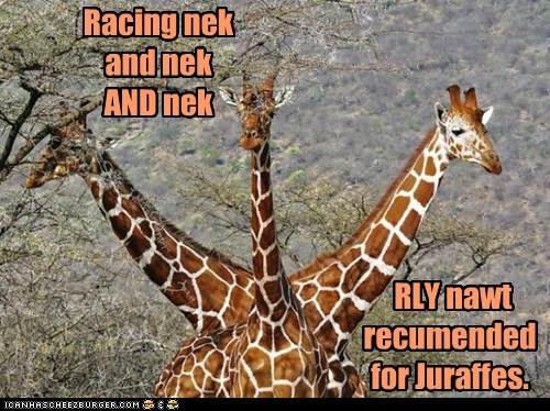 giraffes,neck and neck,pun,racing,recommendation,Traffic Jam