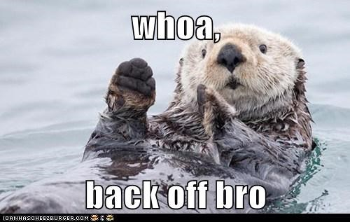 back off,bros,calm,calmly,otter,otters,Otters Holding Hands,puns,slow down,who