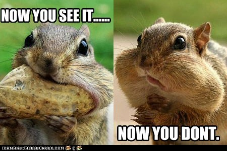 eating peanut squirrel - 6261247488