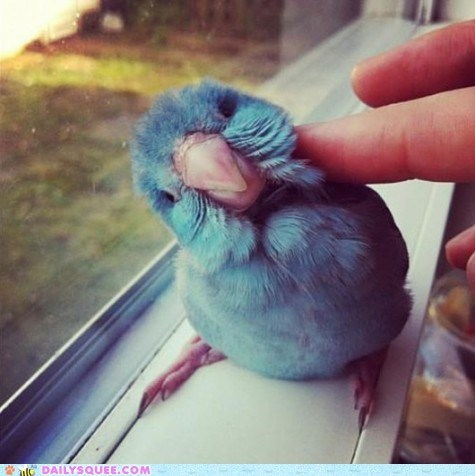 bird blue cute parrot scratch - 6261560576
