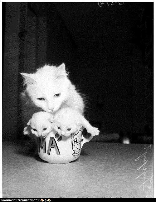 black and white,Cats,cups,cyoot kitteh of teh day,kitten,mama,moms,mugs,newborns