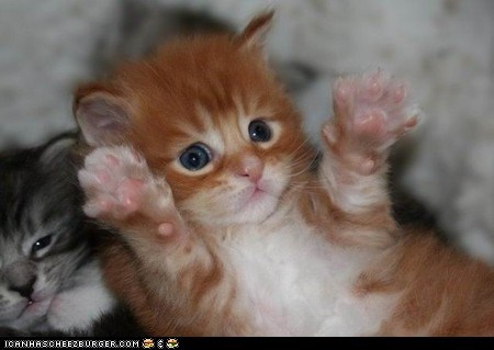 Cats,claws,cyoot kitteh of teh day,jazz hands,kitten,paws,paws up