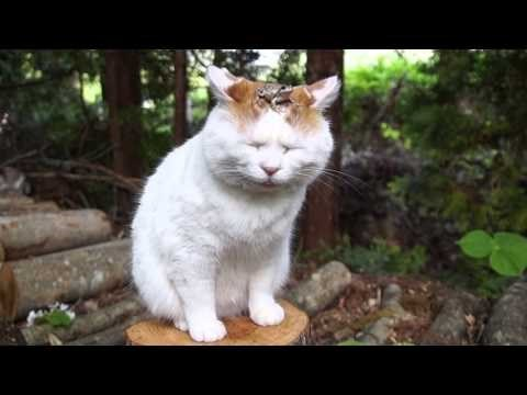 when cat.exe has stopped running in your furry friend