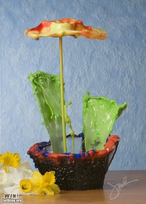 design flowers macro photography paint photography - 6261901824