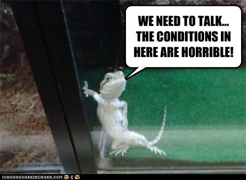 angry cage complaint conditions gecko horrible leaning lizard tank we need to talk - 6262252544