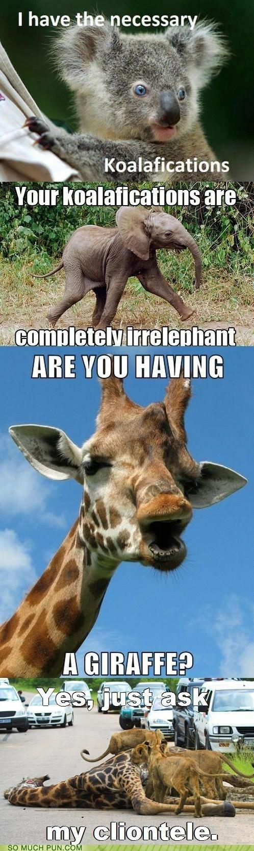 conversation,elephant,giraffes,homophones,koala,lion,literalism,similar sounding