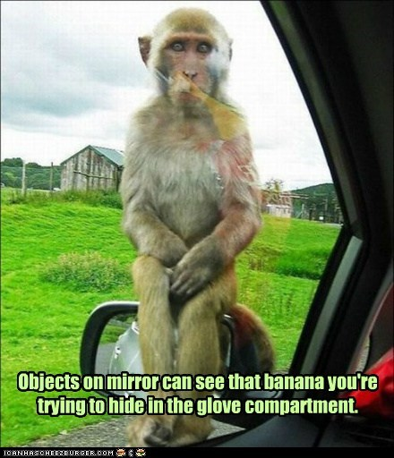 banana,demanding,food,glove compartment,hiding,hungry,i see you,monkey,objects in mirror,Staring