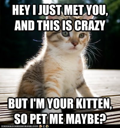 best of the week,call me maybe,carly rae jepsen,Cats,kitten,lolcats,lyrics,petting,Songs