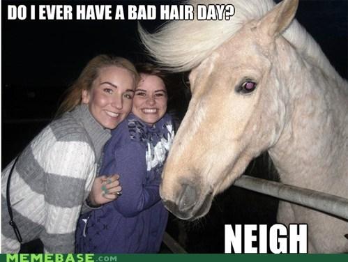 hair,horse,Memes,neigh