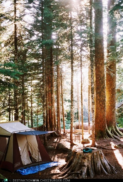 camping,tent,woods