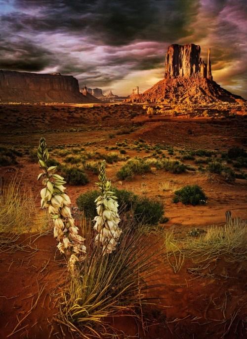 desert Hall of Fame rocks utah valley - 6263870208