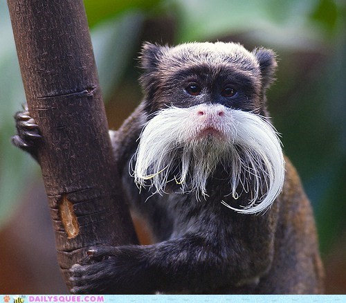 beards,branch,climbing,emperor tamarin,Hall of Fame,monkey,monkeys,mustache,trees