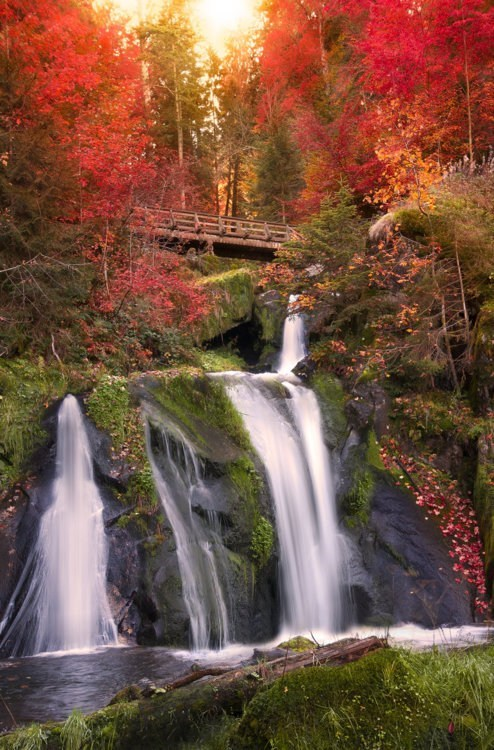 autumn black forest bridge Germany waterfall - 6263900160