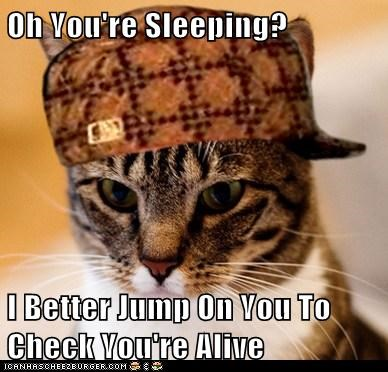 Oh You're Sleeping? I Better Jump On You To Check You're Alive