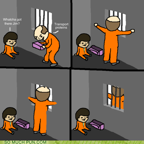 cell,cell wall,double meaning,literalism,transport proteins,wall