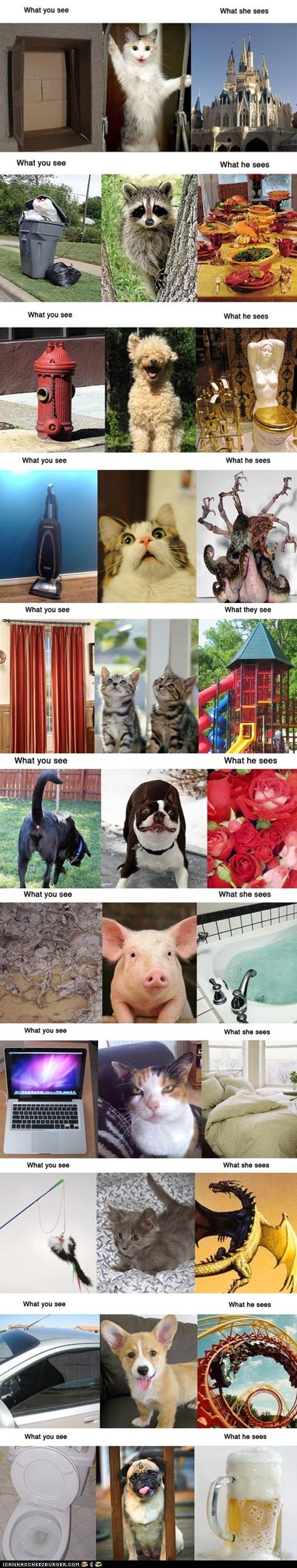 best of the week,Cats,dogs,perception,pig,raccoons,vs,what i see,what they see