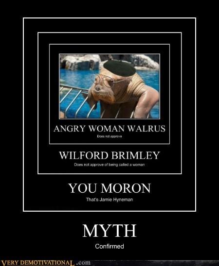 hilarious jamie hyneman myth busters - 6264222976