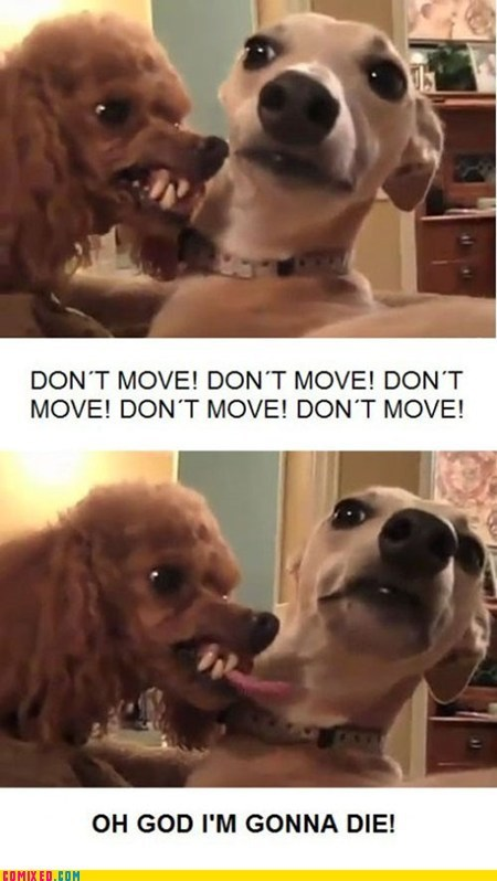 animals,die,dogs,dont-move,mean