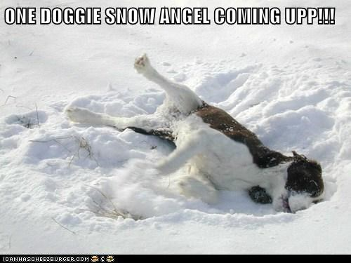 derp dogs snow snow angel what breed - 6264385792