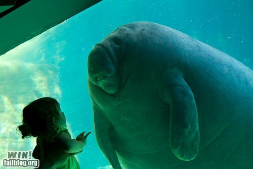 awe,dawwww,manatee,photography,zoo