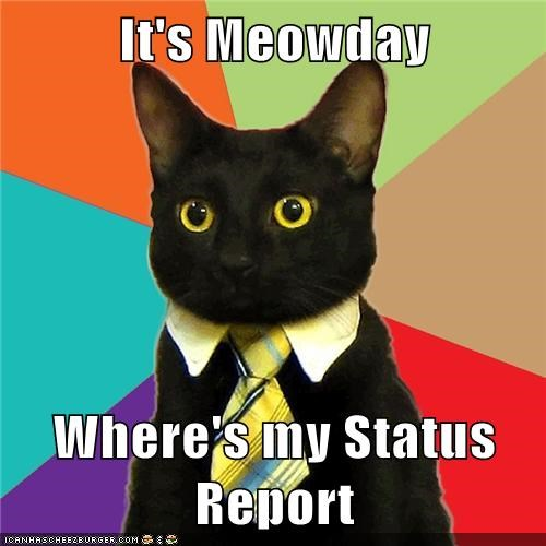 it s meowday where s my status report cheezburger funny memes