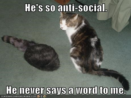 antisocial,captions,coonskin cap,Cats,hat