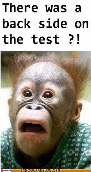 orangutan,other side of test,test humor