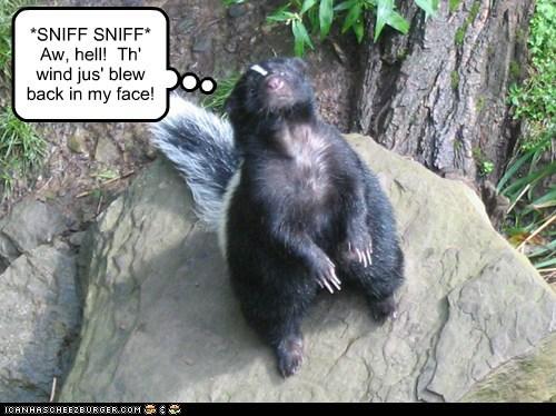 rock skunk tree wind - 6264681216