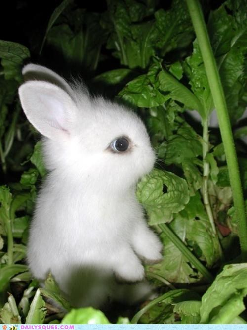 bunny garden Hall of Fame happy bunday tiny vegetable - 6264753152