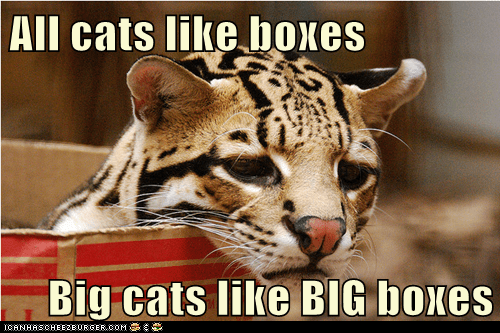 big cats,boxes,Cats,if it fits,ocelot,sad face,sits
