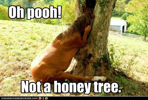 Oh pooh! Not a honey tree.