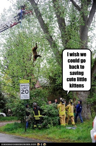 bears firemen kitten political pictures - 6265273344
