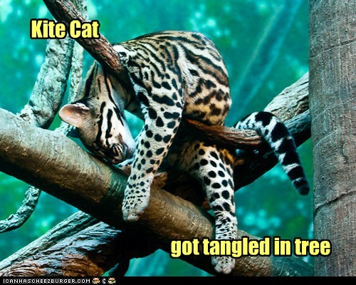 Kite Cat got tangled in tree