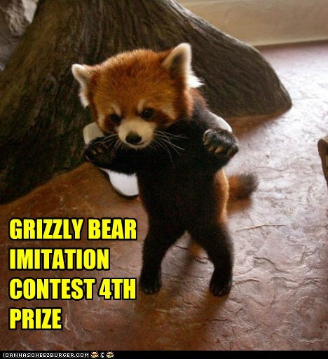contest,grizzly bear,imitation,prize,red panda