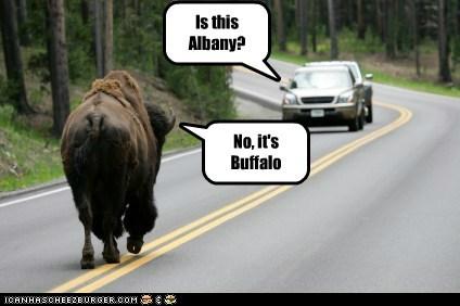 buffalo car Forest road - 6265736192