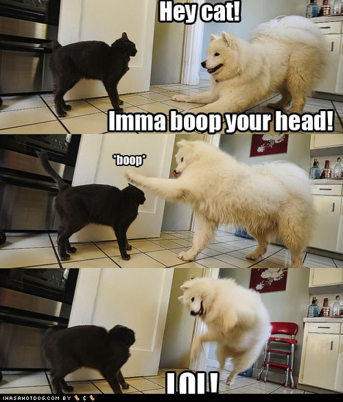 best of the week,boop,cat,dogs,Hall of Fame,lol,samoyed