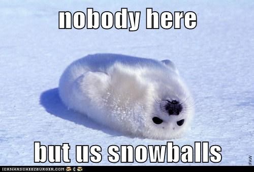 baby seal,fur,harp seal,nobody here,snowballs,us