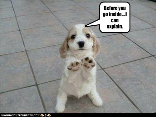 dogs explain explanation puppy spaniel standing trouble uh oh wait - 6266180608