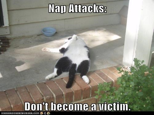 asleep,attack,Cats,collapse,dream,lolcats,nap,nap attack,sleep,sleeping,victim,victims